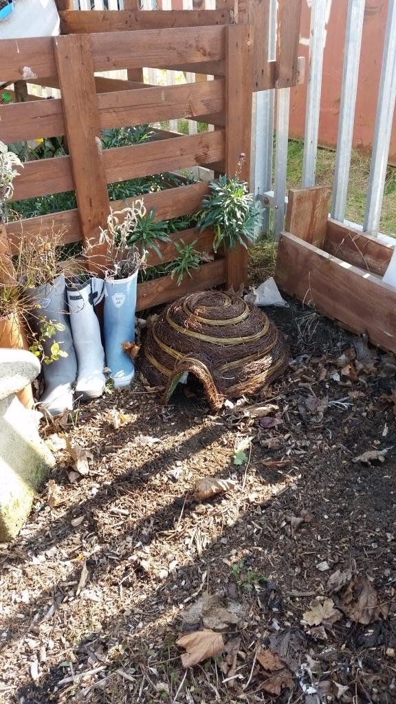Weird Fish garden