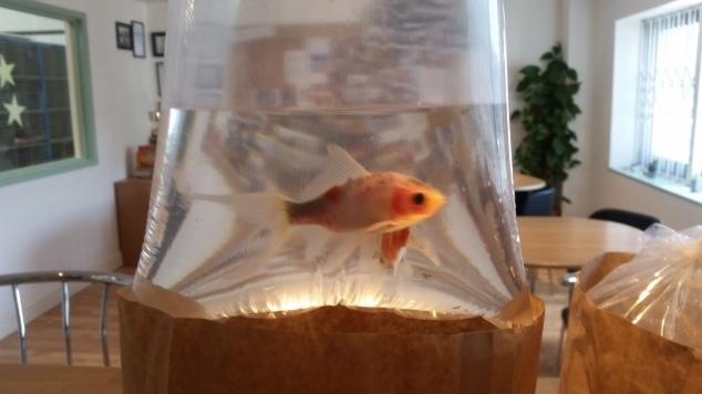 weird fish fish